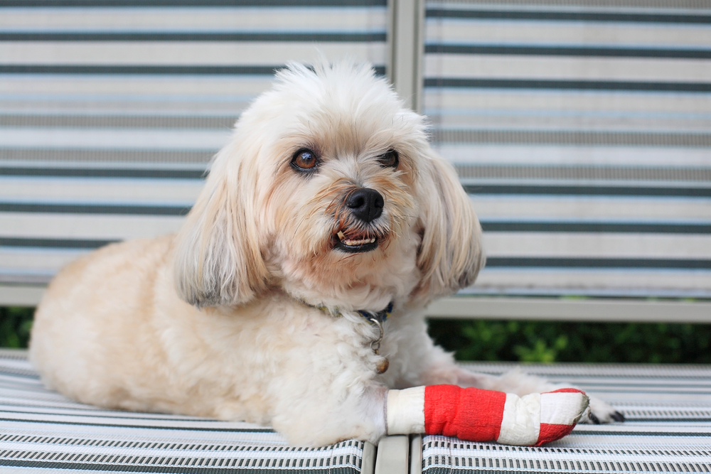 assurances pour chien